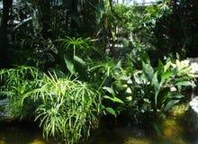 De grote groene installaties groeien in botanische tuin op het water royalty-vrije stock foto