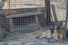 De grote herdershond in een kooi royalty-vrije stock afbeelding