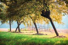 De grote herfst kleurt landschap Stock Fotografie