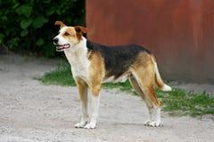 De grote hond op de weg Royalty-vrije Stock Afbeeldingen