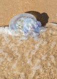 De grote kwallen wasten omhoog op de kust van het overzees Stock Foto's