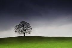 De grote oude boom van Nice bij avond met gras Royalty-vrije Stock Afbeeldingen