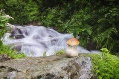 De grote paddestoel groeit dichtbij de bergrivier stock fotografie
