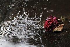 De grote regendruppelsdaling aan de grond voor vernietigde rood nam toe royalty-vrije stock afbeelding