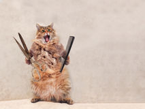 De grote ruwharige kat is zeer grappige status groomer 16 Royalty-vrije Stock Foto's