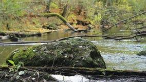 De grote steen ligt in het midden van de rivier op een achtergrond van de herfstbank stock video