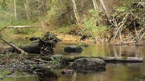 De grote stenen en de logboeken liggen op de bodem shoaled de herfstrivier stock videobeelden