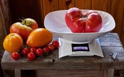 De grote tomaat ligt in het saldo Royalty-vrije Stock Foto