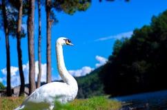 De grote vogel heeft wit haar stock foto's