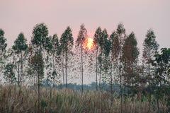De grote zon plaatst langzaam bewegingen door de grote boom stock fotografie
