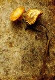 De Grunge todavía de la flor vida - amarillo Fotos de archivo libres de regalías