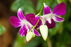 De härliga blommorna Royaltyfria Bilder