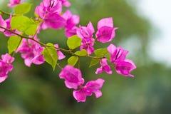 De härliga blommorna Arkivfoto
