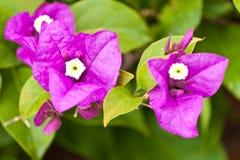 De härliga blommorna Royaltyfri Fotografi