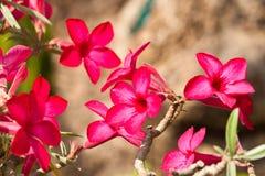 De härliga blommorna Fotografering för Bildbyråer