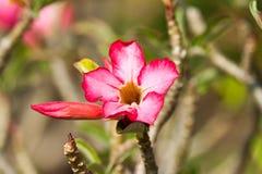 De härliga blommorna Arkivfoton