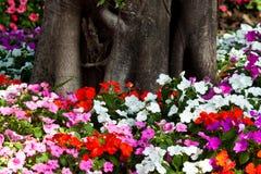 De härliga blommorna Royaltyfri Foto