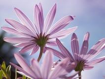 De härliga blommorna Arkivbilder