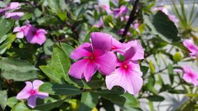De härliga blommorna i Cypern Royaltyfri Foto