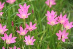 De härliga blommorna i parkera Royaltyfri Bild