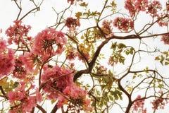 De härliga blommorna på den glänsande himlen royaltyfri fotografi