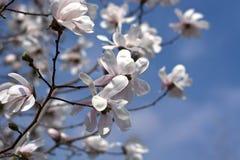 De härliga färgerna av våren royaltyfri bild