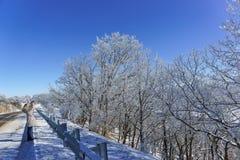 De härliga filialerna för flickafotografier som täckas med frost nära vintervägen på kantAzish-Tauen Lagonaki arkivbilder
