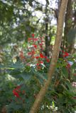 De härliga flowesna i trädgården royaltyfri foto