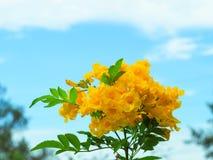 De härliga gulingblommorna Arkivbild