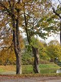 De härliga träden Royaltyfria Bilder