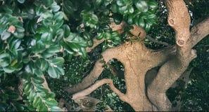 De härliga trädkurvorna fotografering för bildbyråer