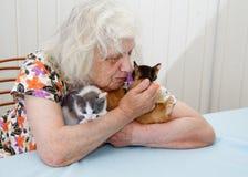 De hållande kattungarna för farmor Arkivbild