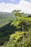 Sörja treen och berg Arkivbilder