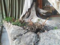 De höstgräset och filialerna är härliga i stenkrukor royaltyfri fotografi