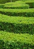 De haag van het bukshout royalty-vrije stock foto