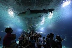 De haai van het aquarium Stock Fotografie