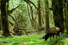 De habitat van het regenwoud stock afbeelding