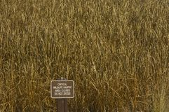 De Habitat van het wild Stock Fotografie