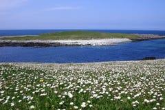 De habitat van Machair op de Westelijke Eilanden, Schotland Stock Afbeelding