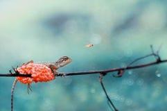 De hagedis, hangt, natuurlijke insectaard, Stock Fotografie