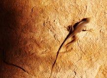De hagedis van de woestijn op de rots royalty-vrije stock afbeelding