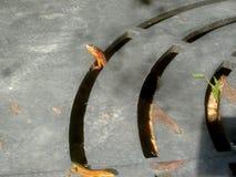 De hagedissen zijn uit - één zegt hallo stock foto's