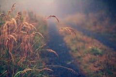 De halmen van het gras Stock Afbeelding