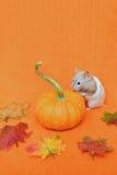 De hamster bekijkt Pompoen Royalty-vrije Stock Foto