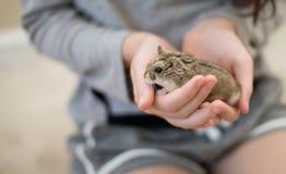 De hamster Cuteness in childs overhandigt royalty-vrije stock afbeeldingen
