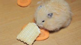 De hamster eet wortelen stock video