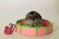 De hamster op de speelplaats Stock Afbeelding