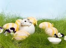 De hamster van Pasen stock afbeeldingen