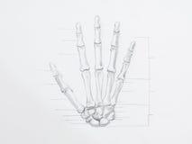 De hand beent potloodtekening uit Stock Fotografie