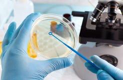 De hand die van de laboratoriumtechnicus een petrischaal planten Royalty-vrije Stock Afbeeldingen